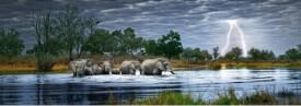HEYE Panoramapuzzle - Alexander von Humboldt - Herd of Elephants - 2000 Teile